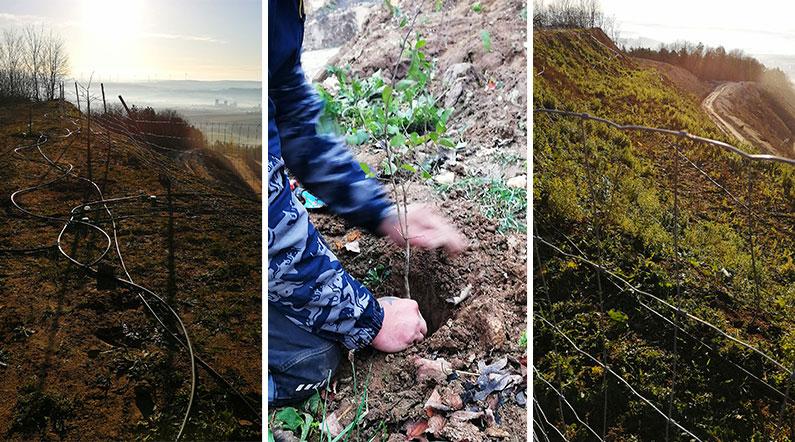 PROFIBAUSTOFFE: 10.000 Bäume für die Rekultivierung